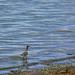Explore Oregon Recreation: Mann Lake