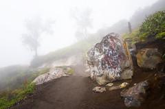 java - ijen (peo pea) Tags: indonesia giava java sentiero road crater cratere ijen hell paradise inferno paradiso tree fog miners sulfur minatori hard work