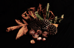 Autumn collection 2016 (johnaboogie) Tags: fir cones conkers leaves brown autumn colours stilllife horsechestnut tistytosty studiolights