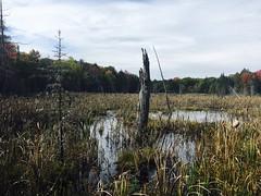 (Bill Smith1) Tags: muskoka jacksonlake fall2016 hike ontario canada fall nature landscape iphonese