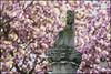 Bonn-Kirschbluete-12 (kurvenalbn) Tags: deutschland bonn pflanzen blumen nordrheinwestfalen frühling kirschbluete