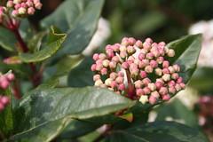 Spring flowers 002 (ianharrywebb) Tags: flowers flower springflowers rbg iansdigitalphotos