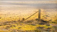 Morning sun in the bog (mbernholdt) Tags: morning sun sunlight nature landscape denmark photography bog naturephotography haslev landscapephotography regionzealand