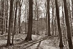 Der Weg zur Burg der Raubritter von Hune (Uli He - Fotofee) Tags: nikon uli ulrike frhling nikon90 fotofee ulrikehe ulihe