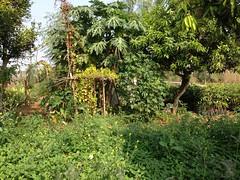 Narsanna's sister's farm