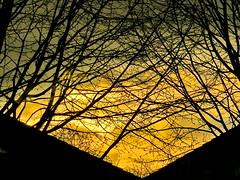 lines in yellow (Mattijsje) Tags: yellow branches takken geel lucht sky skies dusk silhouettes rooftops roofs daken
