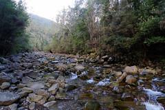 20160712-01-North West Bay River (Roger T Wong) Tags: 2016 austraia cathedralrock northwestbayriver rogertwong sel2470z sony2470 sonya7ii sonyalpha7ii sonyfe2470mmf4zaosscarlzeissvariotessart sonyilce7m2 tasmania wellingtonpark bushwalk hike outdoors tramp trek walk