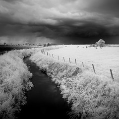 Farmageddon (jellyfire) Tags: trees summer sky blackandwhite storm monochrome clouds zeiss canon landscape ir mono cows farm infrared nottinghamshire ze landscapephotography sibthorpe canon5dmkii distagont3518 zeissdistagont18mmf35ze