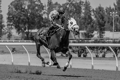 7-9-2016 Cal Expo Thoroughbred Racing (13 of 75)_filtered (Steven.Styles) Tags: california summer horse speed statefair fair racing horseracing sacramento calexpo 2016 thoroughbredracing stevenstyles