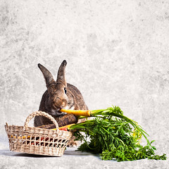 Winter Carrots (Jeric Santiago) Tags: pet rabbit bunny animal basket eating conejo carrot lapin hase kaninchen   winterrabbit