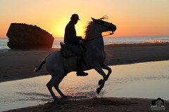 La Luz (Enrique Jerez) Tags: sunset espaa horse sol beach water de caballo huelva playa andalucia puesta matalascaas