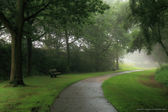 Morning mist (Laurent Castiau) Tags: mist brume t summer canon canoncamera canonlens chemin path naturallight lumirenaturelle arbres trees parc park