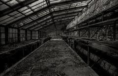 Old Greenhouse (Carlos Sobrino) Tags: nikon madrid greenhouse bw blackandwhite monochrome csobrino flickelite