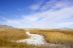 Fish Springs Salt Pan ll (fate atc) Tags: fishsprings usa utahdesert remote saltgrass saltpan