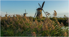 Kinderdijk at sunset, Netherlands (CvK Photography) Tags: autumn canon color cvk europe fall holiday kinderdijk landscape nature netherlands southholland sunset zuidholland nederland nl goldenhour windmill mill