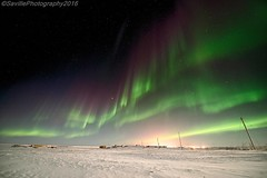 ABC_7369s (savillent) Tags: aurora borealis northern lights north arctic landscape night photography nocturne nocturnal dark mysterious ufo alien sky skies stars universe astrology snow winter ice road freeze savillent francis anderson red green purple blue neon change lunar nikon travel nature discover tuktoyaktuk northwest territories nwt nt xfiles dream world canada climate black acdc pink floyd polar cold august 2016