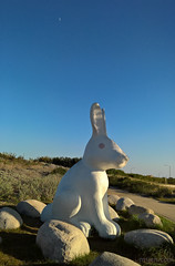 Rabbit and the Quarter Moon (Ms. Jen) Tags: california lumia lumia950 moon newportbeach newportbeachciviccenter photobyjeniferhanen quartermoon september2016 cameraphone msjencom park publicart rabbit sculpture unitedstates