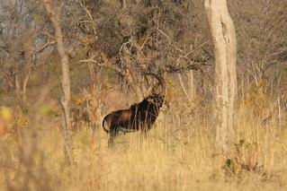 Namibia Hunting Safari - Caprivi Strip 8
