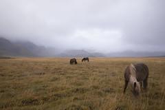 Horses - Iceland (wietsej) Tags: horses iceland sonyalphadslra900 sonyvariosonnart1635mmf28za sal1635z landscape fog