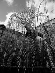 Salice Piangente (nena31189) Tags: blackwhite foto budapest viaggio salice