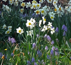 Backlit Daffodils at Trelissick Gardens NT Cornwall (Cornishcarolin. Thank you everyone xxxx) Tags: flowers nature cornwall bulbs filters nationaltrust daffodils oilpaint cornishgardens oilpaintfilter trelissickgardensnt daffodilsincornwalluk