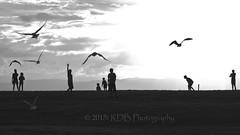 Beach Cricket 02 (ArdieBeaPhotography) Tags: girls sunset seagulls playing beach boys silhouette youth ball children flying gulls bat young running cricket nz bowling scouts batting kiwi wicket