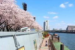 (Asa-moya) Tags: japan tokyo asakusa     sumidaward   mukojima sumidapark taitoward thesumidagawariver 02apr2015
