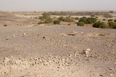 IMG_0132 (Alex Brey) Tags: castle archaeology architecture ruins desert ruin mosque medieval jordan khan residence islamic qasr amra caravanserai qusayramra umayyad quṣayrʿamra