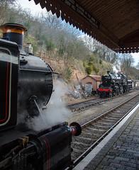 1501 and 43106 (LMSlad) Tags: black pig flying spring br railway severn valley gala 260 gwr lms pannier bewdley 1501 hawksworth ivatt 43106