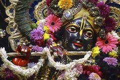 (Daniel Leckenby) Tags: india beautiful special adventure holy spiritual krishna hindu dham realisation vrindavan