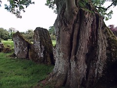 """Fáinne Cloch an Ghráinseach (Gaeilge Bheo) Tags: county ireland irish history megalithic stone circle religious photography photo site cool pretty lough images unknown historical gaeilge muster grange limerick pagan nofilter facebook megalith photooftheday picoftheday linkedin remnant gur cloch art"""" éire history"""" day"""" """"photo """"best twitter """"high ireland"""" mumhan leac """"irish allshots """"pic bestoftheday """"tourist """"tourism """"visiting fáinne pinterest """"instagram instagramers instadaily igdaily instagood instamood instago """"fergal jennings"""" res"""" resolution"""" """"sighseeing ireland"""" ferghalj pintergy"""
