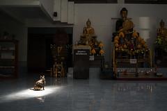 * (Sakulchai Sikitikul) Tags: street cat 35mm thailand sony voigtlander streetphotography statues snap songkhla nokton hatyai a7s