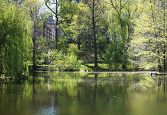 'The Pool' -- Central Park (Joe Josephs: 2,600,180 views - thank you) Tags: newyorkcity water spring centralpark joe centralparknewyork springtime josephs urbanlandscapes fineartphotography waterreflections urbanparks springcolor fineartprints fujifilmxt1 zeisstouit50mmf28m joejosephs2015