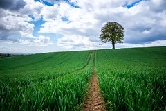 Sentinel (Robgreen13) Tags: uk trees wales clouds south cardiff fields crops plough