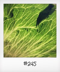 """#DailyPolaroid of 30-5-16 #245 • <a style=""""font-size:0.8em;"""" href=""""http://www.flickr.com/photos/47939785@N05/27744546433/"""" target=""""_blank"""">View on Flickr</a>"""