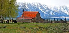 Grand Tetons, Mormon Row (frank1556) Tags: grandtetons mormonrow