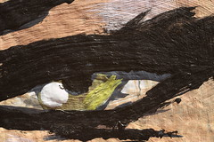 Painted eye (lenswrangler) Tags: lenswrangler digikam rawtherapee flickrphotowalk sanfrancisco mission missionstreet macromondays macrotextures clarion clarionalley clarionalleymuralproject mural paint eye wall outdoor
