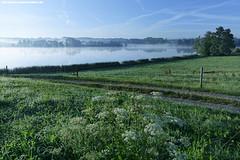 MORGENSTIMMUNG AM OBERSEE BEI KISSLEGG (PADDYSCHMITT.DE) Tags: obersee kislegg sommerimwestallgu sommerinkislegg see allgu bergsicht morgennebel nebelstimmung