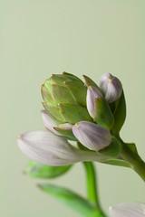 IMG_2822 (nancyrodeberg) Tags: macroflowers