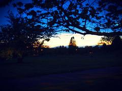 P7090162 (mina_371001) Tags: night nighttime vancouver canada lifeincanada lifeinvancouver photographywork olympusomdem10 goingbackhome sky dark tree