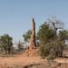 Termite landscape