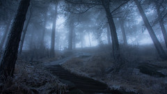 Cold Fog (outvizion) Tags: fog cold snow forest mysterious huashan mountain travel