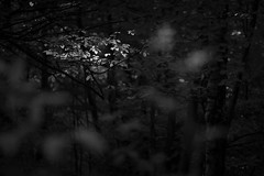 Patch of Light (Greg Hitchcock) Tags: england kent trees uk woodland lightanddark leaves light monochrome blackandwhite forest flora foliage