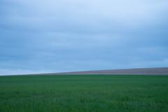 Minimalism (Caterix) Tags: colours bluehour cannock clean dusk longexposure minimalism rapeseed simple simplified