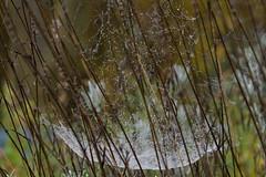 ckuchem-6144 (christine_kuchem) Tags: nahaufnahme regen regentropfen spinnennetz tropfen wasser wassertropfen romantisch