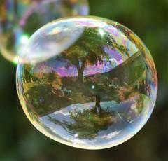 Bulle de savon (La Magie Du Moment) Tags: bulledesavon bulle bulles savon jardin extrieur reflet rond cercle soleil lumire nature nikon t