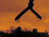 ^ (ix 2017) Tags: israfel67 méxico mexico cuernavaca morelos gotas drops cielo sky orange naranja anaranjado duotono duotone cliché cliche estereotipo reja fence