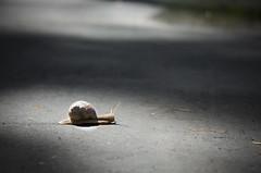 I'm on my way... :) (D.Sinkute) Tags: snail nature summer walk