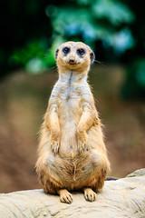 Zoo Duisburg (astrabaer8283) Tags: duisburg germany zoo nature mandrake nordrheinwestfalen deutschland de