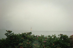 img028 (Madara Troscenko) Tags: film analog kodak portra400 canonae1 ishootfilm filmisnotdead denmark aarhus outside europe nature amateur photograph photography candid 35mm sea seaside seashore shore coast water nordic northern blue breeze autumn cold horizon horizont landscape outdoors seagulls skyline city